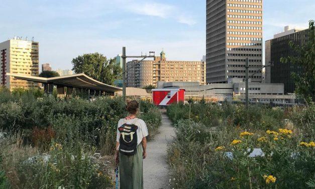 Rotterdamse Architectuur Maand: Het Dakdorpen Collectief op 27 mei 2019